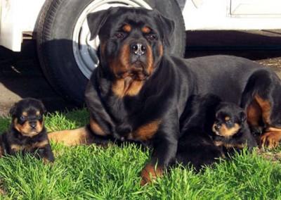 Arkon & O pups (1)_1