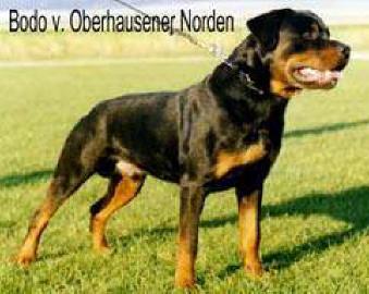 Bodo vom Oberhausener Norden (Deutschland)