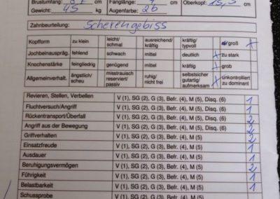 Körbericht-Snoopy-vom-Amtsbach
