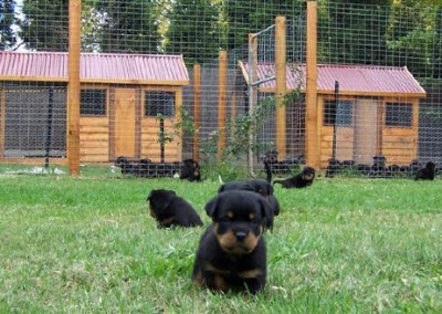 breeding3